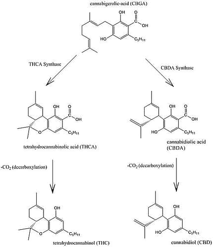 Decarboxylate-Cannabidiol_and_THC_Biosynthesis